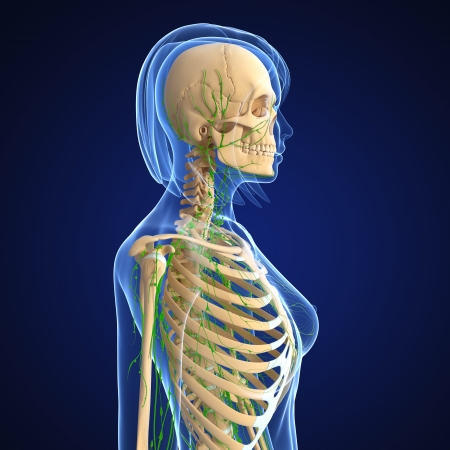 3d art illustration of  lymphatic system of female isolated on blue illustration
