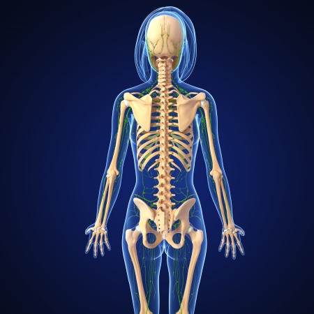 3d art illustration of  lymphatic system of female back in blue background illustration
