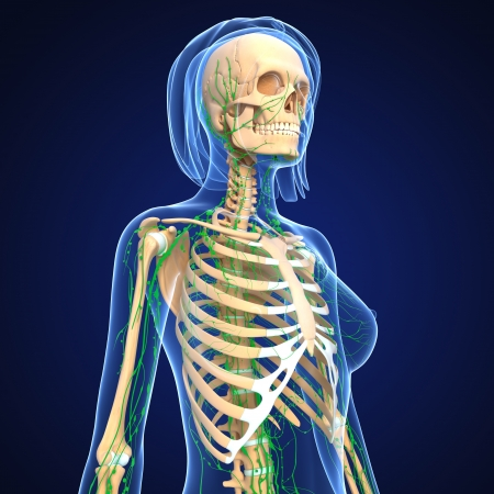 3d art illustration of  lymphatic system of female skeleton with blue body  illustration