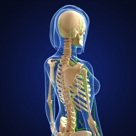 3d art illustration of  lymphatic system of female side view in black Stock Illustration - 14772017