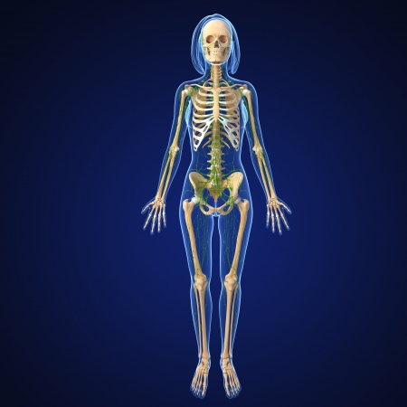 3d art illustration of  lymphatic system of female full body illustration