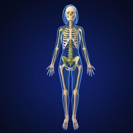 3d art illustration of  lymphatic system of female full body illustration