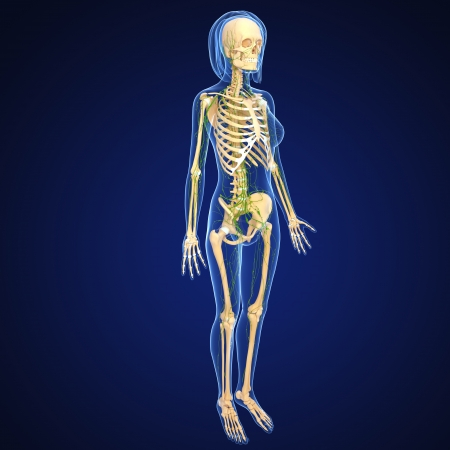 3d art illustration of  lymphatic system of female skeleton  illustration