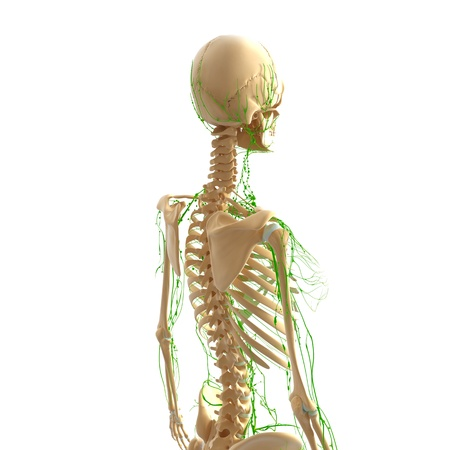 swollen: Lymphatic system of female back