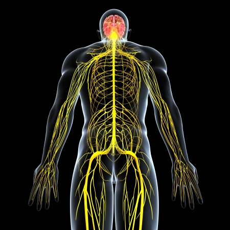 back view of male nervous system isolated on black background Banque d'images