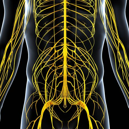 half body view of male nervous system isolated on black background photo