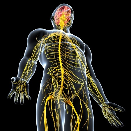 side view of male nervous system isolated on black background