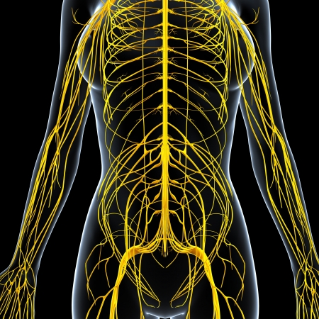 nerve signals: front view of female nervous system isolated on black background Stock Photo