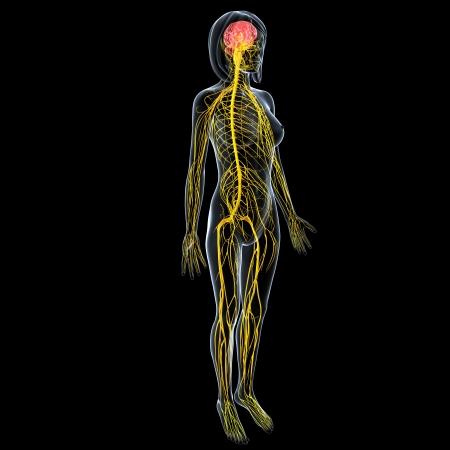 nervios: vista lateral del sistema nervioso femenino cuerpo completo aislado sobre fondo negro