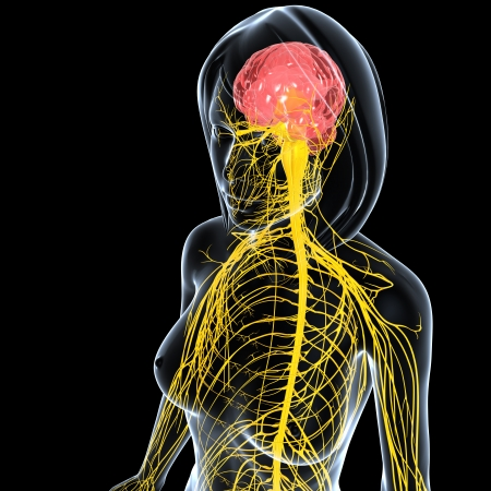 front side view of female nervous system isolated on black background Stock Photo
