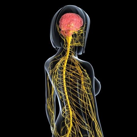 zenuwcel: achteraanzicht vrouwelijke zenuwstelsel geïsoleerd op zwarte achtergrond