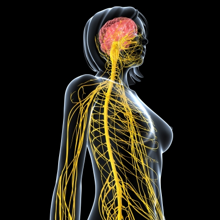 central cord: side view female nervous system isolated on black background Stock Photo