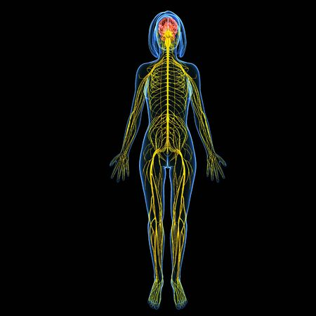 Nervous system of female body front view isolated in black