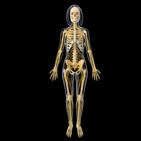 Nervous system of female body front view isolated in black background photo