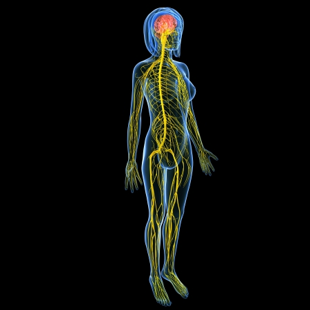 nervous system: Nervous system of female full body side view isolated in black background Stock Photo