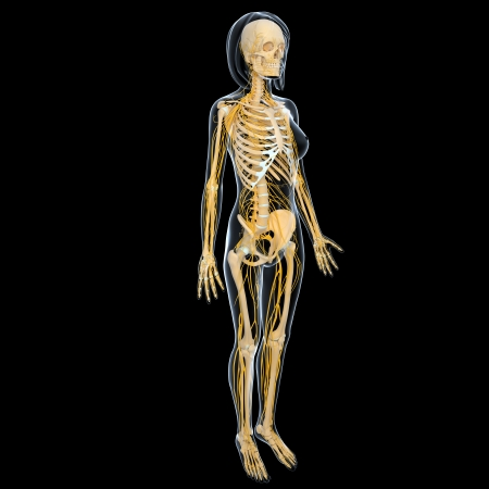 Nervous system of female full body isolated in black background photo