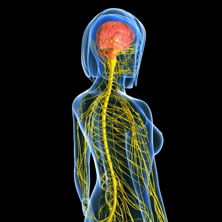 Nervous system of female back side view isolated in black background Stock Photo