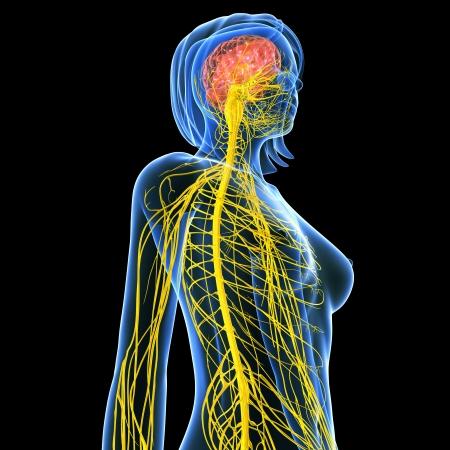 黒の背景で分離された女性の側面の神経系 写真素材