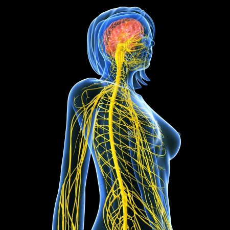 Nervous system of female side view isolated in black background