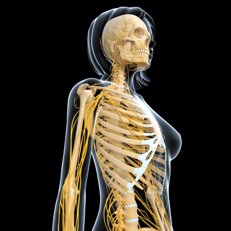 Nervous system of female isolated in black background photo