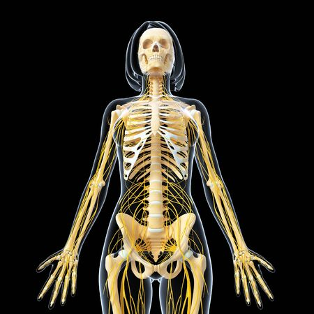 Nervous system of female full body isolated on black photo