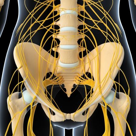 nervios: El sistema nervioso de medio cuerpo femenino aislados en negro Foto de archivo