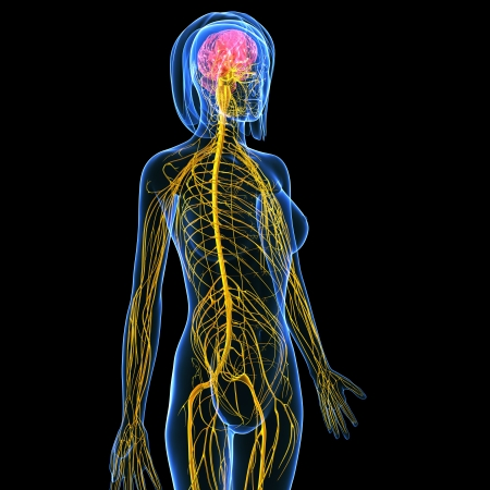 side view of Nervous system of female isolated on black Stock Photo