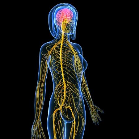 zenuwcel: zijaanzicht van het zenuwstelsel van vrouwelijke geïsoleerd op zwart