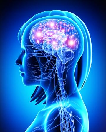 Ilustración del arte 3d del cerebro activa femenina