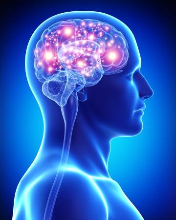 zenuwcel: vrouwelijke actieve hersenen
