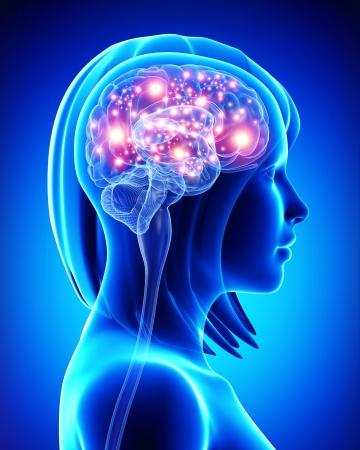 Weiblichen aktiven Gehirn Standard-Bild - 15181717