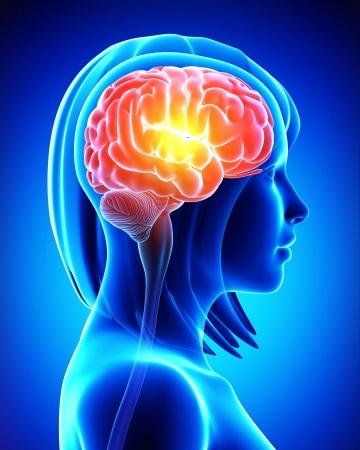 cervello femminile in blu x-ray