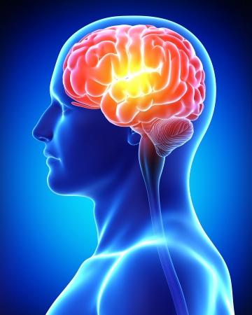 cerebro masculino en azul de rayos X Foto de archivo