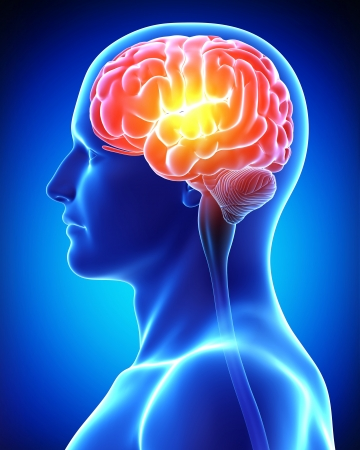 zenuwcel: mannelijke hersenen in blauw x-ray