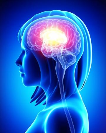 psicologia: Cerebro femenino Foto de archivo
