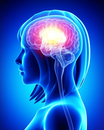 zenuwcel: Vrouwelijke hersenen
