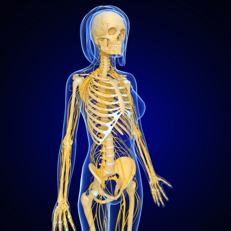 female nervous system isolated on blue, half body side view photo