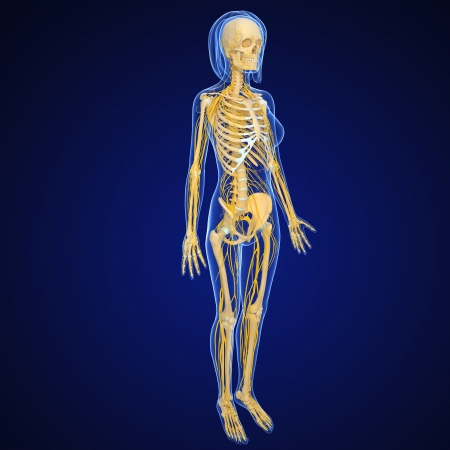female nervous system isolated on blue full body view photo