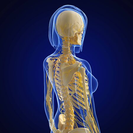 female nervous system isolated on blue side view photo