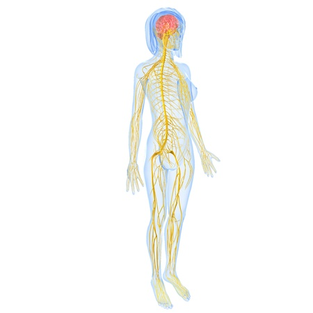 Female Body Side Diagram Trusted Wiring Diagrams