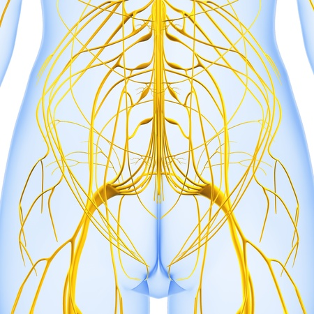 3d art illustration of Nervous system illustration