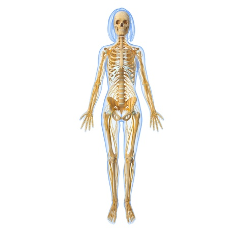 full body front view of female Nervous system photo