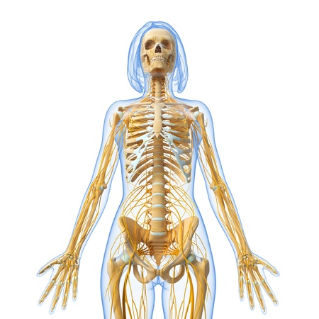 full body view of female Nervous system in white photo