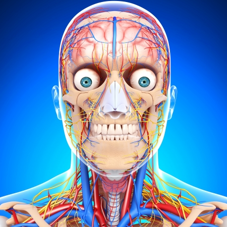 circulating: nervous head circulatory system isolated in blue Stock Photo