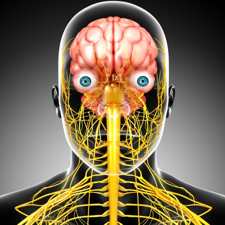 x rays negative: male skeleton with brain and nervous system isolated in gray Stock Photo