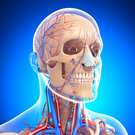 circulating: head circulatory system and nervous system