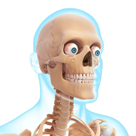 x rays negative: Front side view of male skeleton Stock Photo