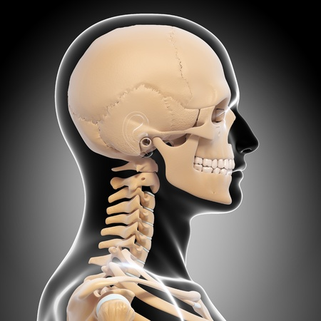 human skeleton side view of head isolated in gray photo
