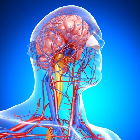 blood circulation: side view of brain circulatory system with, eyes, throat, teeth isolated in blue background