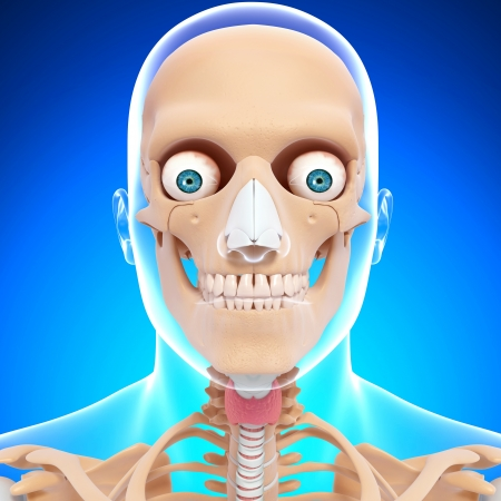 illustration of Human skeleton of head with eyes, teeth in blue background illustration